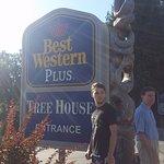 BEST WESTERN PLUS Tree House Foto