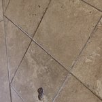 the floor in our room, very dirty snd damaged