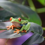 Frogs Heaven Foto