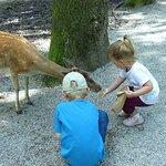 Wildpark Poing Foto