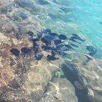 Lions Dive & Beach Resort Curacao Foto
