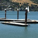 The docks with seals on Angel Island.