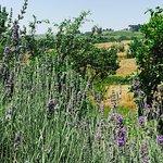 Foto de Agriturismo La Mela