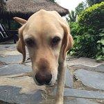 犬のカペン。大人しくて良い子。食べ物をねだる時は目で訴える系。