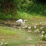 Occoquan Bay National Wildlife Refuge