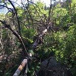 Pino Canyon