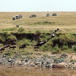 Photo de Wildlife Kenya Safaris - Day Trips