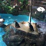 Photo de Dallas World Aquarium
