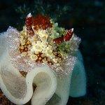 Foto de Bali Scuba Masters