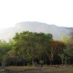 Photo de Jungle Hut