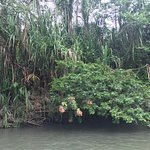 river nearby,... amazing Costa Rican forests!