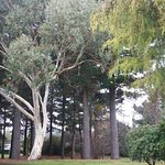 Tongariro Lodge Foto