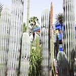 Cactus du monde entier au Jardin Majorette