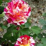 La Roseraie de Provins Photo