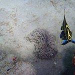 Photo de Posada Los Corales