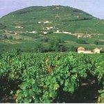 Le Mont Brouilly est tout proche.