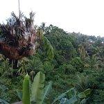 Foto de Gunung Merta Bungalows