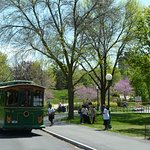 Scenic Trolley & Niagara Falls State Park views