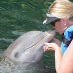 Dolphin Discovery Puerto Aventuras Foto