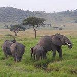 Photo de Kilima Camp