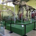Museo de Paleontologia y Arqueologia de Estanzuela