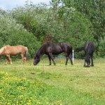 Photo de Farmhotel Efstidalur