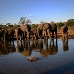 Lots of elephants in the area. Photo by Ilan Ossendryver