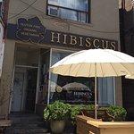 Hibiscus照片