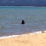 even Tahoe bears like Pope beach!