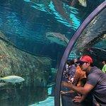 Foto de Ripley's Aquarium of the Smokies