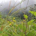 Rainy Meadow