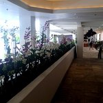 Lobby area full of orchids