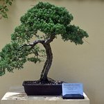 Bonsai garden is beautiful