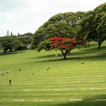 Royal Poinciana tree on the grounds of Punchbowl