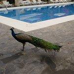 Photo de Hotel Majoro