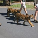 Australia Zoo Foto