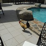 rooster at top of the baths