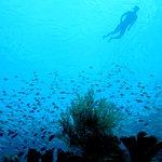 Diving around Siladen and Bunaken.