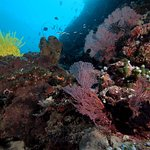 Diving around Siladen and Bunaken.