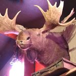 This moose was staring at me while I ate I wonder if they sell moosehead beer?