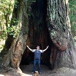 Prairie Creek Redwoods State Park Foto