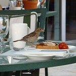 鳥が食べる