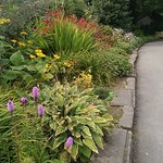 Flower beds bursting with colour, texture and life