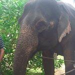 Hotel Elephant