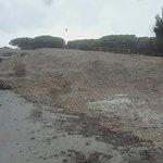 T'as de compostage d'algues présenté comme une plage 4 étoiles une odeur immonde.