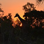 Beautiful African sunset!