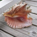 This shell is now in our living room! We found it at Bird Island and there were many more!