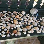 Our shell haul for one day