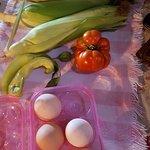 Fresh veggies from the Farm gardens