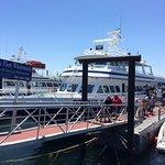 Dolphin Fleet Whale Watch Foto